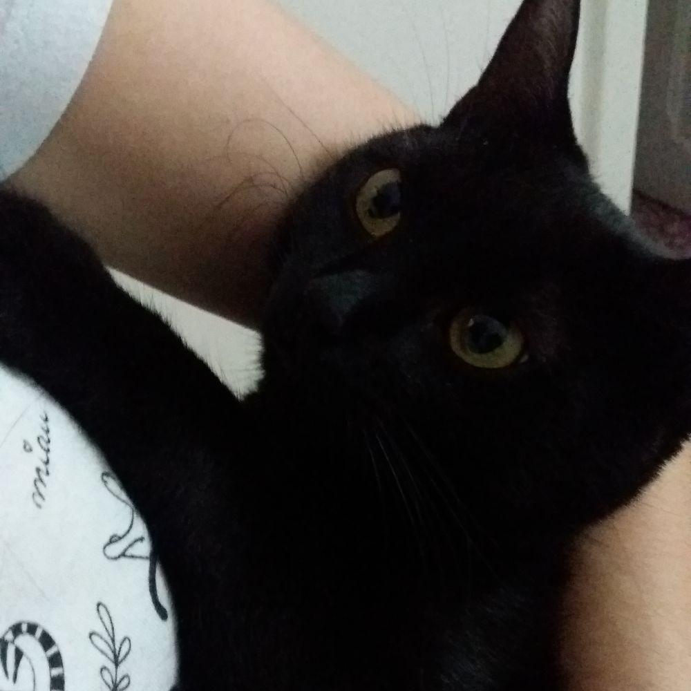 Lookbook: Cat Noir